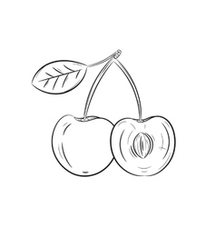 Hand drawn cherry sketches vector image vector image