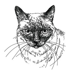 Cat head hand drawing vector