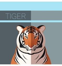 Tiger flat postcard vector