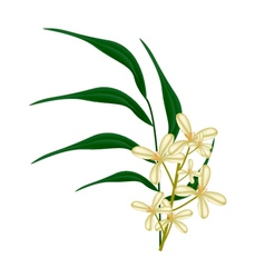 Beautiful sweet osmanthus flower and green leaves vector
