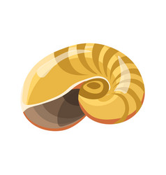 Shell or seashell sea mollusk isolated flat vector