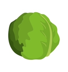 Lettuce vegetable icon vector