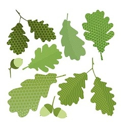 Isolated green leaf of oak vector