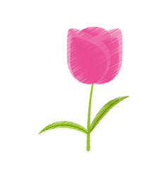 Drawing tulip flower romantic plant vector