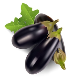 Egg plant vector image vector image