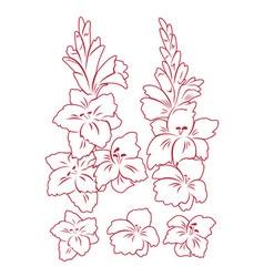 gladiolus flower vector image