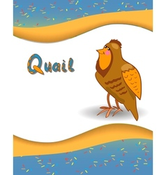 Alphabet letter Q and quail vector image