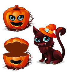 cat in hat and box of pumpkin halloween character vector image