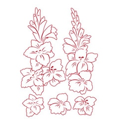 Gladiolus flower vector