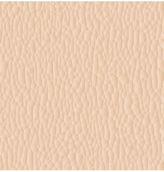 Leather texture closeup for background vector image vector image