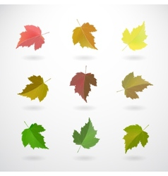 Collection of currant leaves vector image
