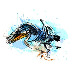 Colored hand sketch of a flying pelican vector
