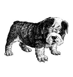 Puppy bulldogs 06 vector