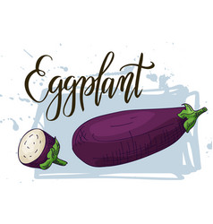 Vegetable food banner eggplant sketch organic vector