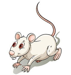 White little rat vector