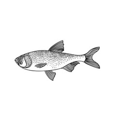 fish sign isolated retro engraved seafood icon vector image vector image