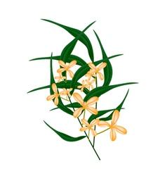 Orange sweet osmanthus flower and green leaves vector