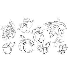 Fruits berries set vector
