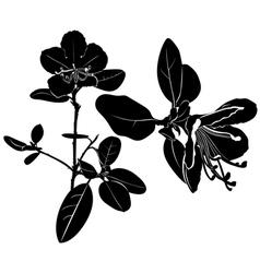 ledum vector image vector image