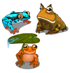 set of three toads different colors vector image