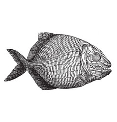 Fish fossil vintage vector