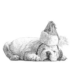 Puppy bulldogs 08 vector image