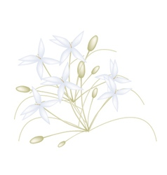 Beautiful white indian cork flowers on white vector
