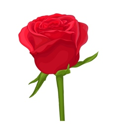 Red rose isolated on white with watercolor effect vector