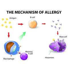 Mechanism of allergy vector