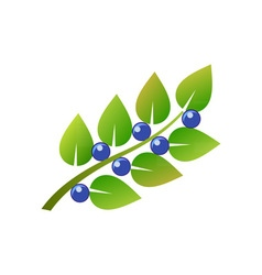 Blueberry-branch-380x400 vector