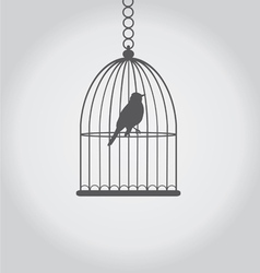 Bird grey vector