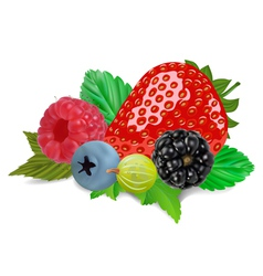 Mixed summer berries vector