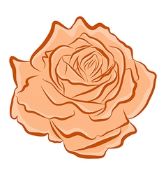 Orange rose vector