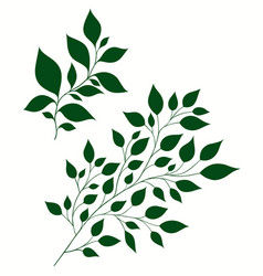 Isolated of stylized branches vector