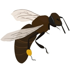 Bee in fly vector