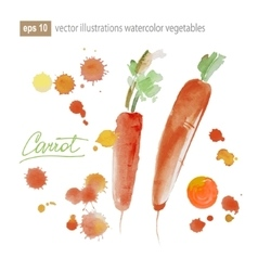 Carrot watercolor painting on white background vector