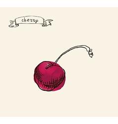 Artistic cherry sketch vector