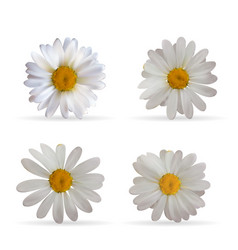 Colorful naturalistic beautiful 3d chamomile set vector