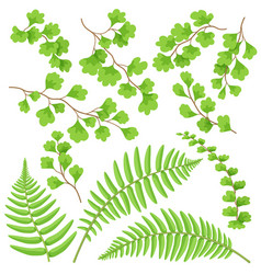 green fern leaves set vector image vector image