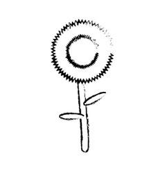 Sunflower icon image vector