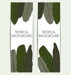 beautifil palm tree leaf tropical silhouette vector image vector image