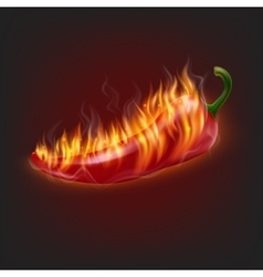 Burning chilli pepper vector image