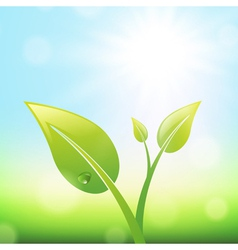 Green Sprout With Leaves vector image