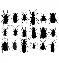 Beetles vector