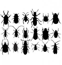 beetles vector image