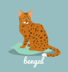 Bengal cute cat on sky blue background vector
