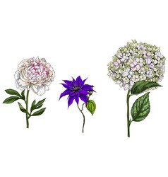 Set with peony clematis and phlox flowers leaves vector