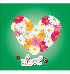 Heart is made of daisies on a green background vector
