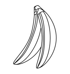 Isolated two bananas fruit vector