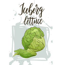 Vegetable food banner iceberg lettuce sketch vector